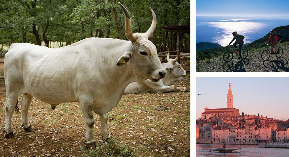 Istria: bue istriano, bike, Rovigno